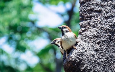 Thought for the Week   Of little sparrows and God's big love