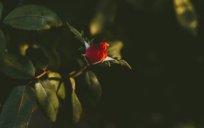 Downloadable Worksheet   Roses and Thorns