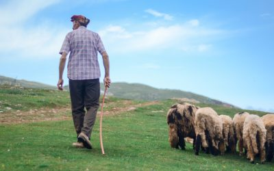 Downloadable Worksheet   Parable of the Lost Sheep