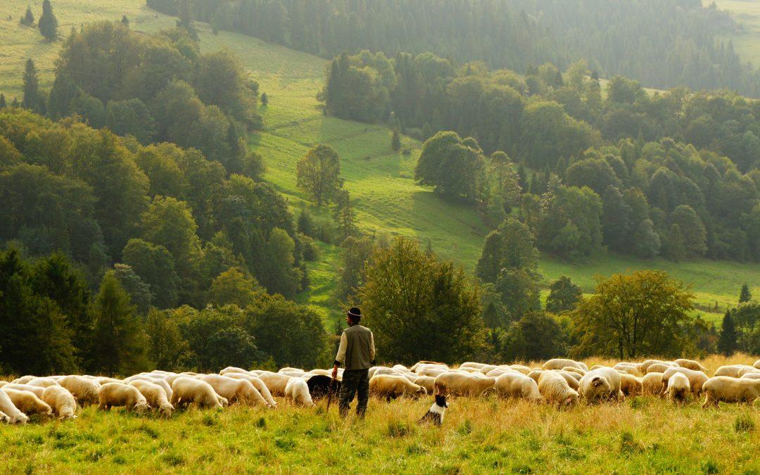 Downloadable Worksheet | The Lord is my Shepherd