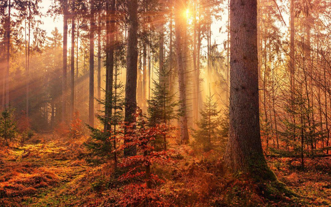 Reflection Sheet | Changing Seasons
